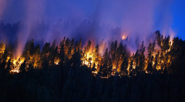 A California forest burns in 2014.