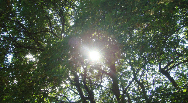 """The bright summer sun was casting its long golden beams through a canopy of trees onto a group of children, playing in a nearby park. ..."""