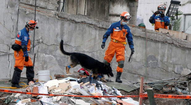 Members from Japan rescue team with their dog search for survivors in the rubble of a collapsed building after an earthquake in Mexico City, Mexico.