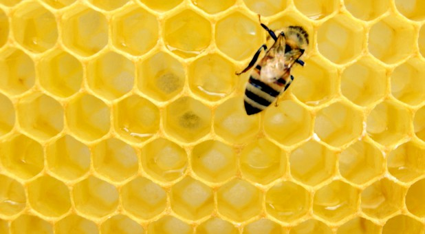 According to a recent survey of U.S. beekeepers, an astounding 37% of all honeybee colonies were lost over the winter.