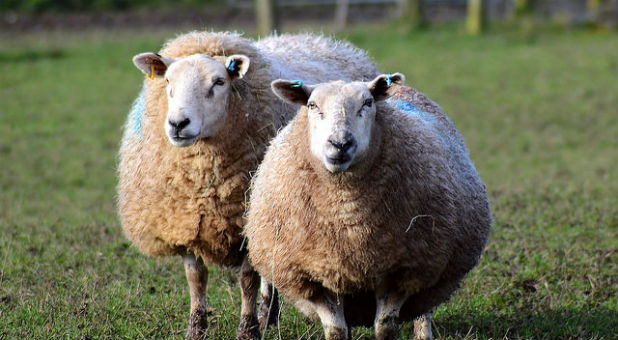 """Are you a """"sheep pastor"""" or a """"leader pastor""""?"""